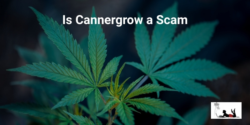 Is-Cannergrow-a-Scam